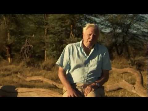 David Attenborough's Africa (BBC) - Epilogue