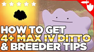 How to Get a 4+ MAX IV Ditto Location, & THE BEST Egg-Hatching Method in Pokemon Sword & Shield