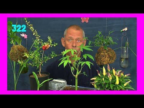 Exotische Pflanzen und andere in der Folge 322 aus der Serie