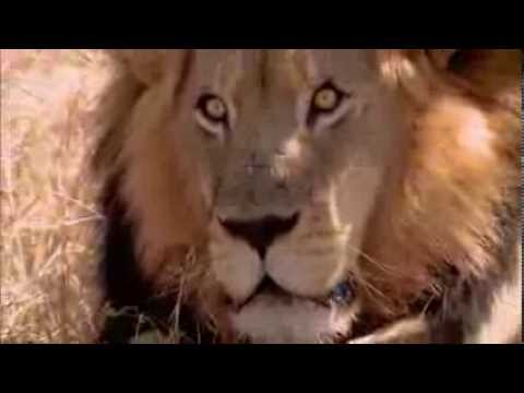 Самые опасные хищники Африки