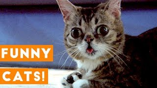 [PETS FOR KIDS] Ultimate TNTL Cats | Funny Pet Videos
