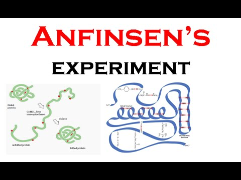 Anfinsen's experiment