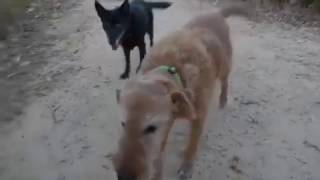 Gracie's happy ending - Best Friends Animal Rescue Inc., Perth, WA