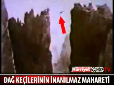 Thumbnail of video Las cabras ninja del Himalaya