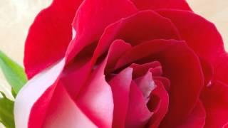 Chori Chori Dil Diya Tha [Full Song] (HD) - Ek Hindustani