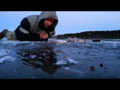 прогноз клева рыбы в чебаркуле 2016