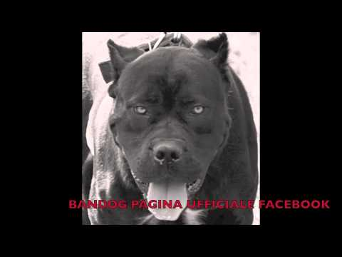 Bandog Crew - Nun ' Me Parla' Male e Napule. RAP NAPOLETANO