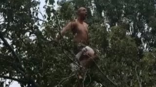 Man High On Meth and Cocaine Screams Like Tarzan From Top Of Tree: Cops