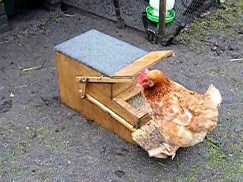Rodent resistant chicken feeder.