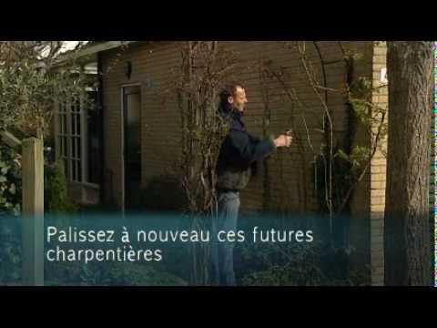 Tailler des rosiers grimpants ou paliss s colour your life youtube - Comment tailler des rosiers ...