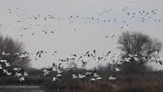 A Symphony of Birds