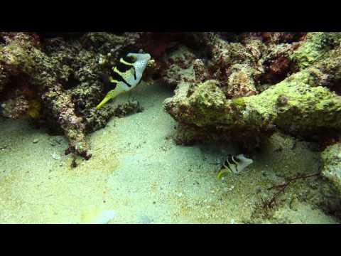 Scuba Diving at Flinders Reef (21 Sep 2014) Full Video HD