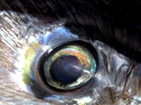 Here's Lookin' At Ya!  June Bug Sportfishing From Beach Haven - NJ.wmv