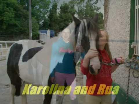 Horses Xxx video