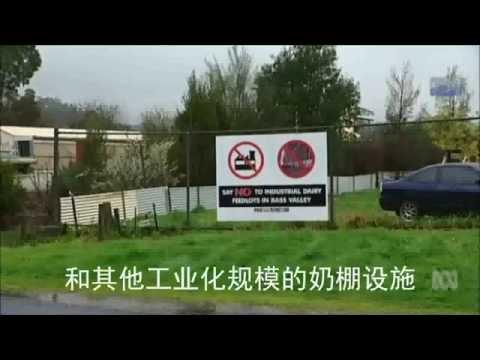 中国投资冲击澳洲乳业 Chinese investment it Australian agriculture