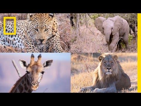 サファリの野生動物たちのハイパーラプス動画