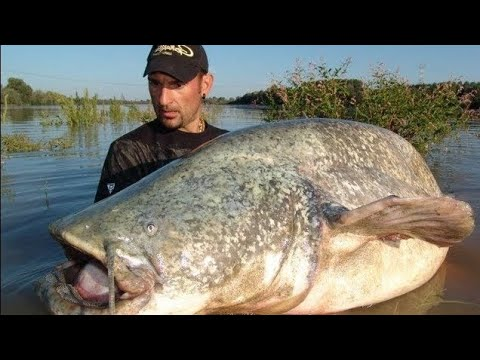 CATFISHING IS A REALLY HARD WORK – HD by YURI GRISENDI