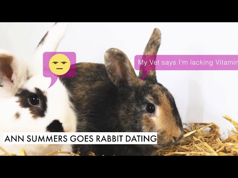 rabbit dating app