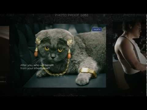 World of creative ads. Episode 2 - Cats