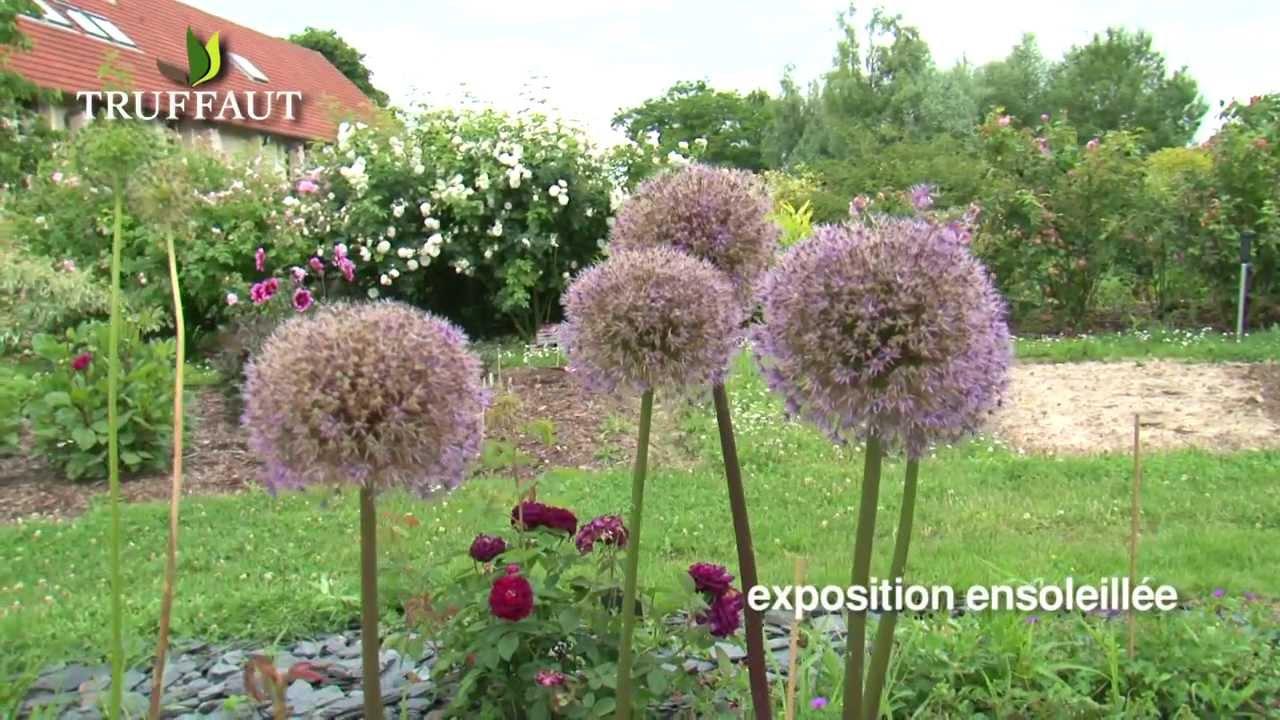 Cr er un massif la plantation de l 39 allium jardinerie for Creer un massif de plantes vivaces