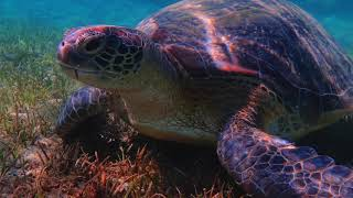 Shams Alam Beach Resort 2018 / Amazing Underwater View / Snorkeling & Diving