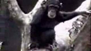 Funny clips - Monkey sniffs his own butt, passes out!
