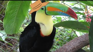 Animal Facts: Toucan
