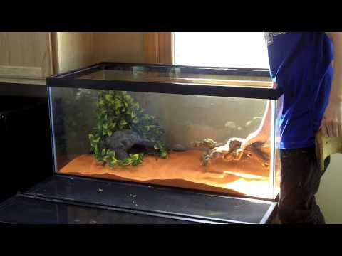 How To Set Up A Bearded Dragon Enclosure