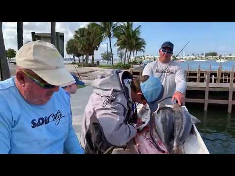 Cleaning Cobia