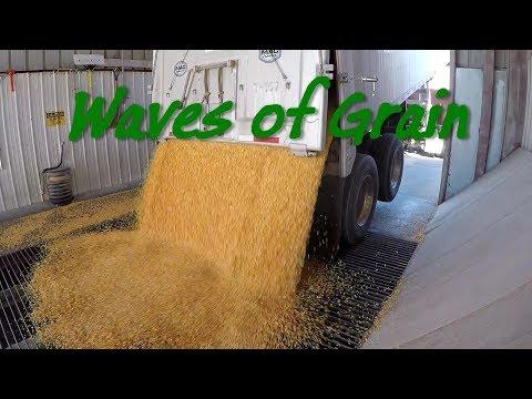 Grain - Why