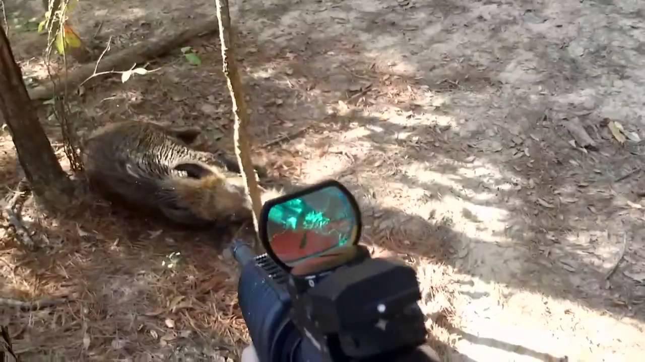Black Hog Down Hog Hunt With Ar 15 Youtube