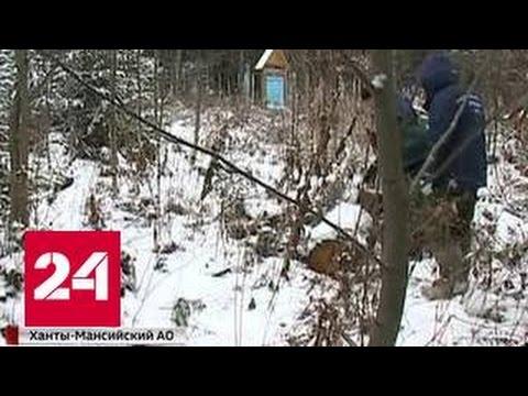 В Иркутской области задержали банду черных лесорубов