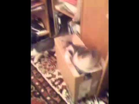 """""""Животная коробка"""" - или последствия покупки ноутбука!"""