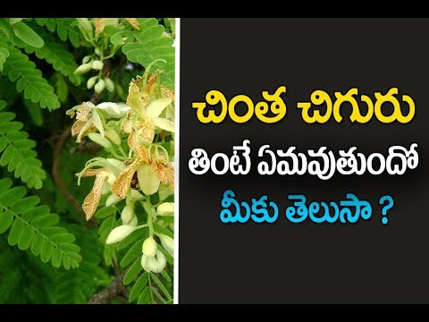Chinta chiguru | Chinta chiguru benefits in telugu | Rrecipes in telugu | tamarind leaves benefits