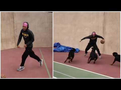 LaMelo Ball gets triple teamed by Lonzo Ball's rottweilers