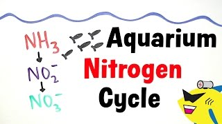 The Aquarium Nitrogen Cycle