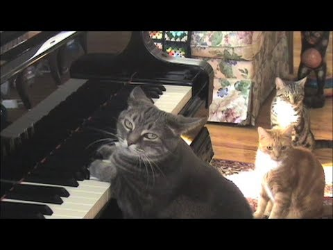 CATcerto. ENTIRE PERFORMANCE. Mindaugas Piecaitis, Nora The Piano Cat