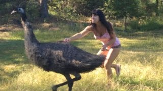 Farm Girl Jen Wrangling an Emu