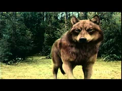 Twilight Saga: Eclipse Battle Vampires & Wolf Pack Fighting Scene