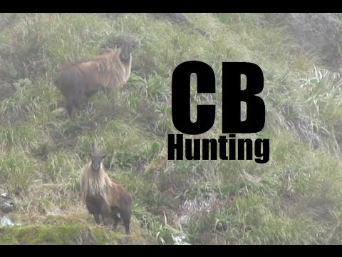 Tahr, Deer and Chamois Hunting on the West Coast of NZ