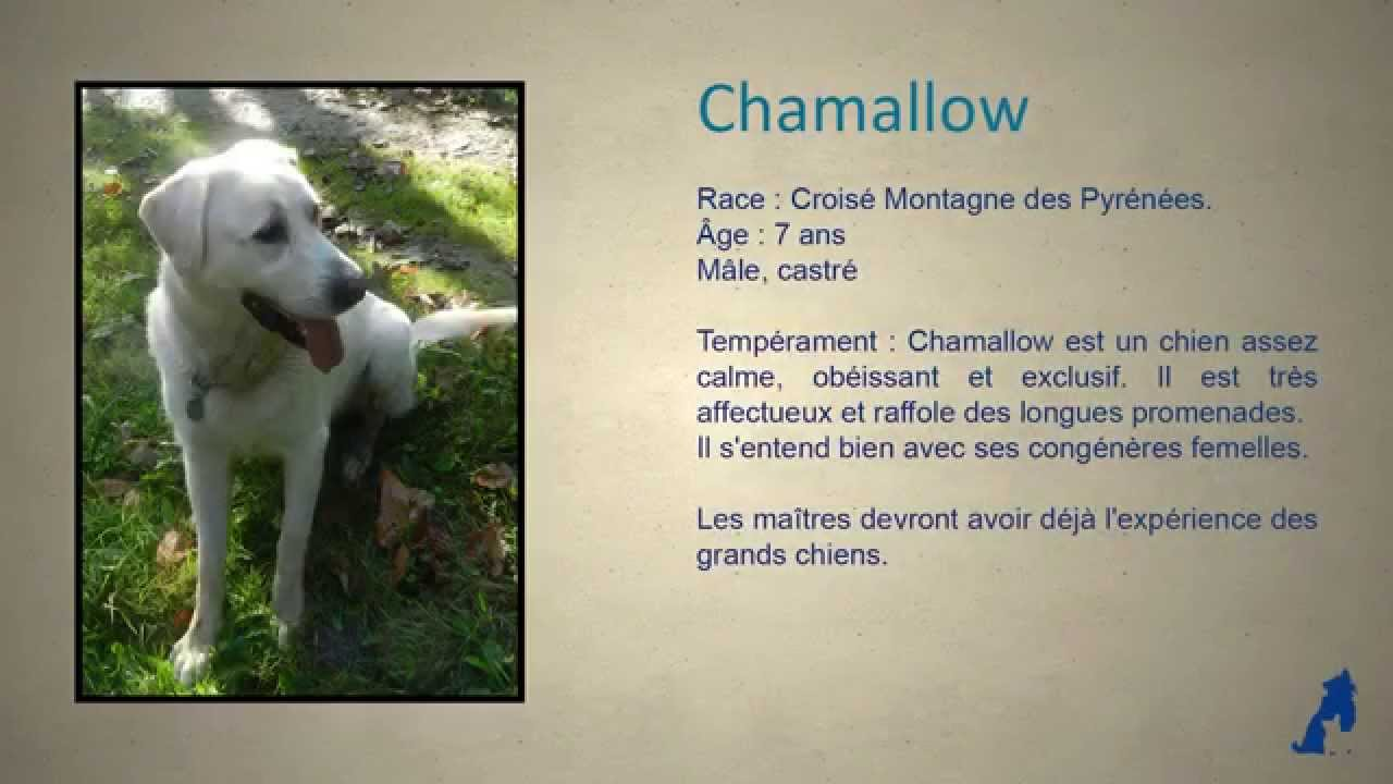 chien adopter chamallow x montagne des pyr n es au refuge sos animaux 78 youtube. Black Bedroom Furniture Sets. Home Design Ideas