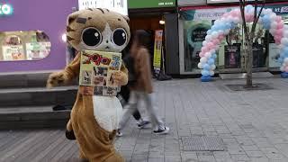 JHKTV] 신촌 명물고양이 한바탕춤 shin chon  special cat  A dancing dance