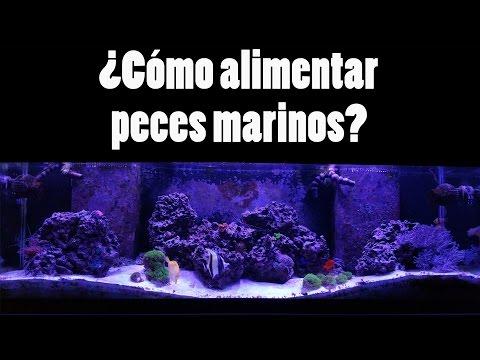Como alimentar peces marinos