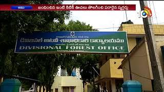 Forest Officers Arrested 11 sandalwood Smugglers At Rollamadugu | kadapa