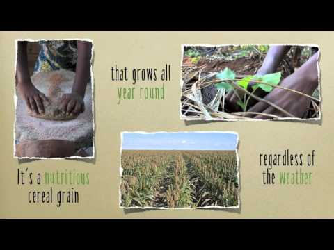 Christian Aid Sustainable Farming