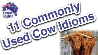 Live Class: 11 Commonly Used Cow Idioms | Learn Australian English | Expressions