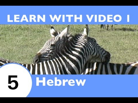 Learn Hebrew With Video -- How to Talk About Safari Animals in Hebrew