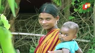 ଚାଲନ୍ତୁ ବୁଲିଯିବା କେନ୍ଦୁଝରର ଏକ ଆଦିବାସୀ ଗ୍ରାମକୁ | Tribal Life of Keonjhar - Odisha Tribal Life