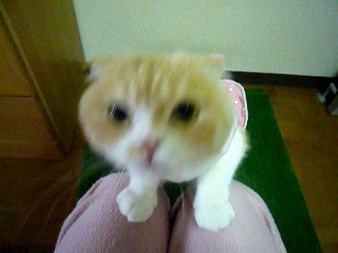 抱っこを断られ逆切れ猫。