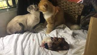 Mommy and daddy cat Celebrate new babies